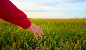 closeup-shot-hand-young-lady-covered-by-red-jacket-with-green-field_181624-25977