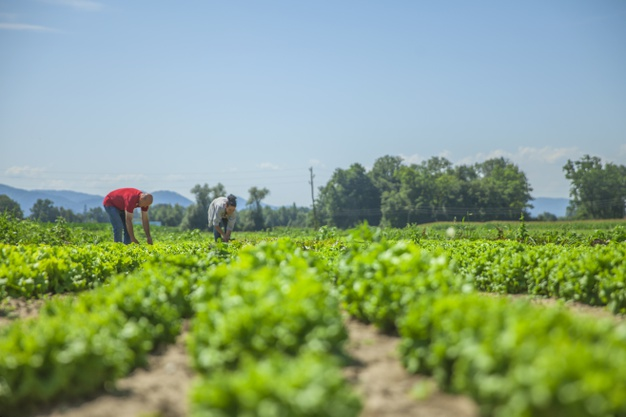 so-many-vegetables-this-field_181624-18619
